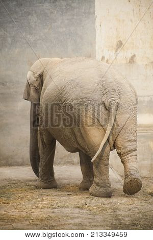 an unexpected encounter with an elephant at the zoo