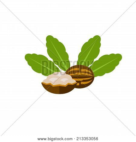 Vector icon of cracked shea nuts. Shea butter, African plant, cosmetic. Nuts concept. Can be used for topics like medicine, cosmetology, plants