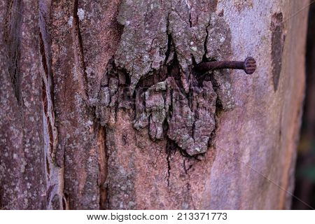 OXIDED NAIL ON A TRUNK OF A TREE