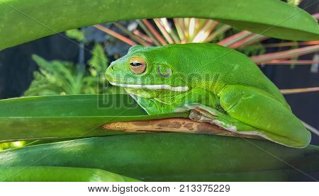 one green frog camouflaged in garden plants