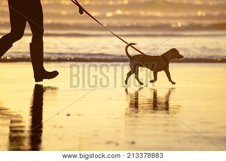Dog walking on the beach, reflection on water at sunset, owner's boots, candid shot