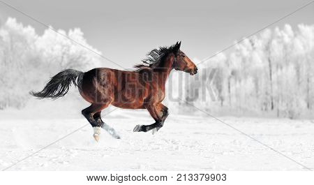 Black And White Photography With Color Horse