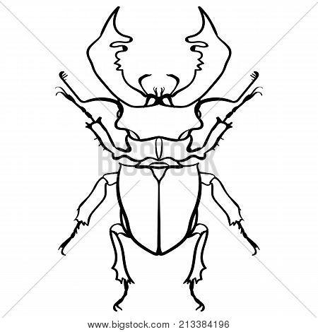 Beetle deer. Horned Beetle. Big Insect Line art. Drawing by hand. Graphic arts. Doodle Tattoo. Lucanus cervus
