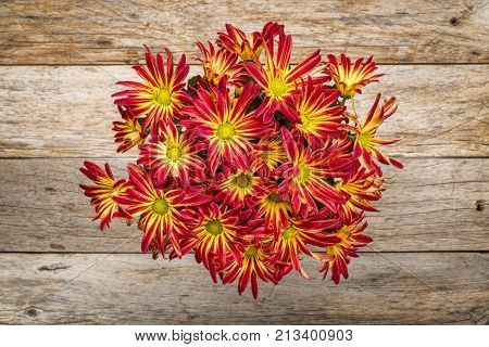 rustic barn wood background with a pot of fall mums