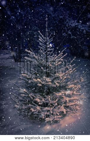 Christmas tree snow background by night