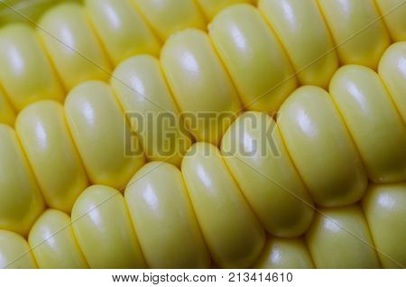 A row of corn seeds that still connect with a corncob pattern background texture background grain background yellow sweetcorn sweetcorn seed row sweetcorn grain row