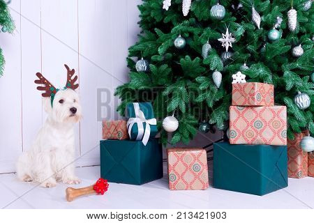 West highland white terrier dog as symbol of 2018 New Year with brown Christmas deer horn and bone with red bow Christmas pine tree with gifts on background