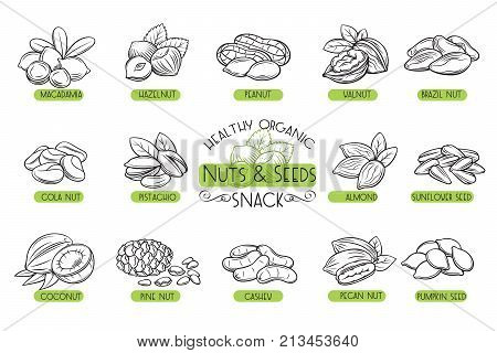 Set vector icons hand drawn nuts and seeds. Cola nut, pupkin seed, peanut and sunflower seeds. Pistachio, cashew, coconut, hazelnut and macadamia. Illustration in sketch retro style.