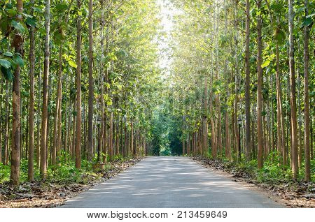 Tree tunnel background in natural at day