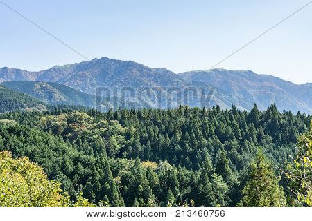 beautiful panoramic view of green japan pine tree line with mountains in the background in starting of Autumn in Nagano central Japan.