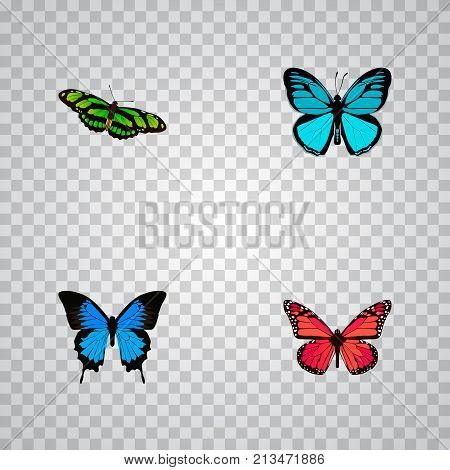 Realistic Green Peacock, Sky Animal, Common Blue And Other Vector Elements