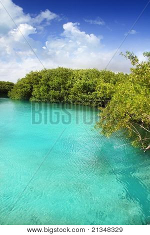 cenote mangrove clear turquoise water in Mayan Riviera Mexico