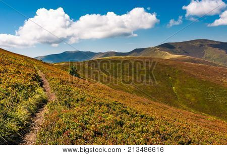 Beautiful Hilly Landscape Of Carpathian Mountains