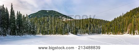Snowy Meadow In Winter Spruce Forest