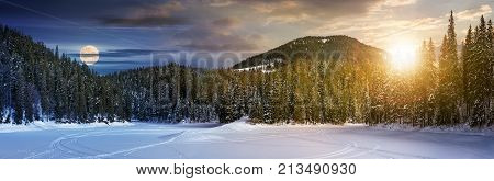 Day And Night Concept Of Winter Spruce Forest
