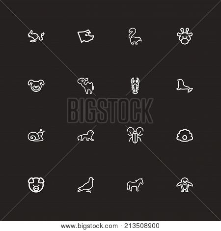 Set Of 16 Editable Animal Outline Icons. Includes Symbols Such As Pearl, Steed, Dogfish And More