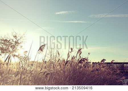 meadow grass and reet on a small creek with a wooden bridge on a bright and sunny winter day - blue sky with free space for text and decoration - vintage matte colors