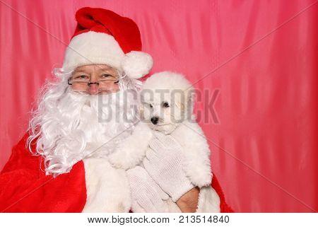 Santa Claus. Santa Claus holds a Bichon Frise Puppy. Bichon Frise Dog.