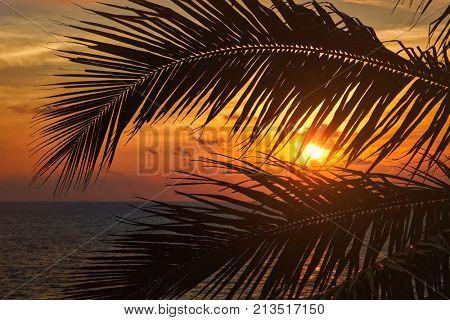 Beach vacation romantic holidays background - ocean sunset visible through palm leaves. Varkala, Kerala, India