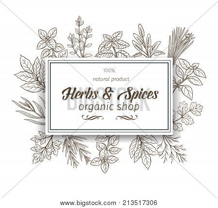 Banner template with hand drawn sketch herbs and spices for farmers market menu design. Vector illustration page decoration culinary herbs in ink retro style.