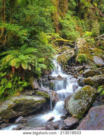 Waterfall In New Zealand Rain Forest