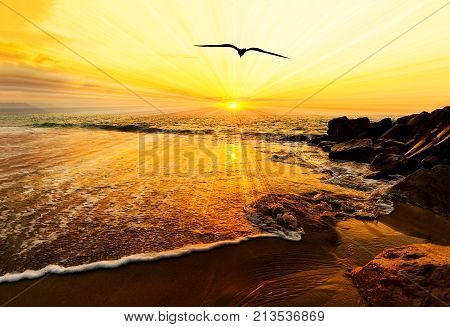 Sunset ocean bird silhouette is a bird flying with wings spread flying toward the light of of freedom and inspiration over the ocean sunset.