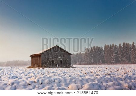 The winter morning was exceptionally cold and the fields were covered with mist. The sun rays color the barn walls amber.