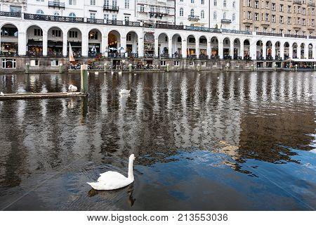 Swan And Waterfront Of Binnenalster In Hamburg