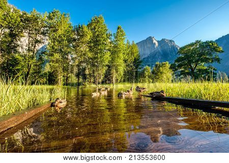 Meadow with flooded boardwalk in Yosemite National Park Valley. California, USA.