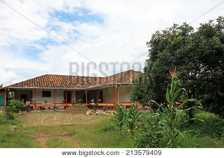 Farmhouse surrounded by coffee plants near El Jardin, Antioquia, Colombia, South America