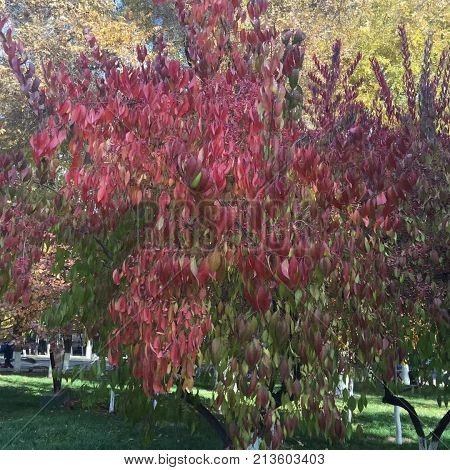 Autumn is coming, pink and yellow tree leaves people have infinite yearning  for  the autumn scenery .
