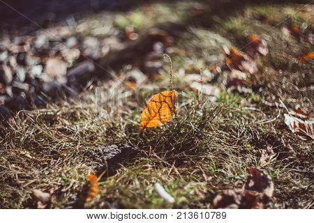 Green grass and dry grass, dry plants, dry leaves. Nature background. Nature photography. Outdoor photography. Art photography. Selective focus.