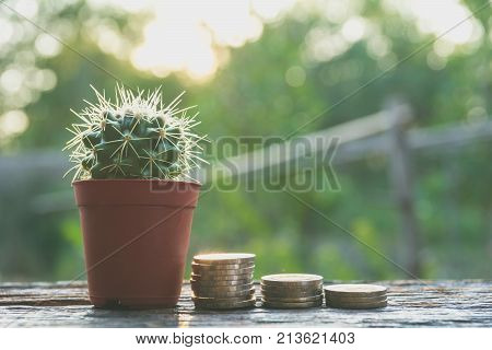 Cactus wood with stack coins cactus in tree pot. Cactus plants on wood table and nature background.