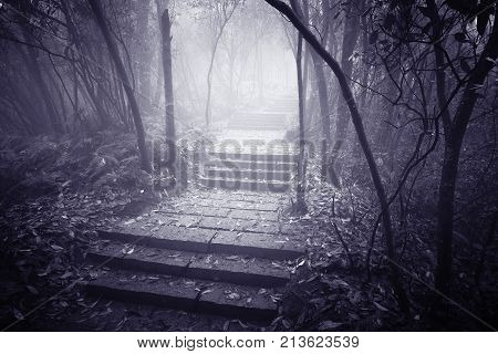 Wet stone path in the foggy forest at evening time.