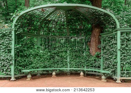 Summer gazebo covered with green bindweed. Nature, gardening background, recreation concept