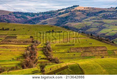 Grassy Rural Hill In Late Autumn Sunny Day