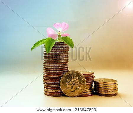 The concept of money growth, the success and prosperity of business as a flower growing at a fast pace