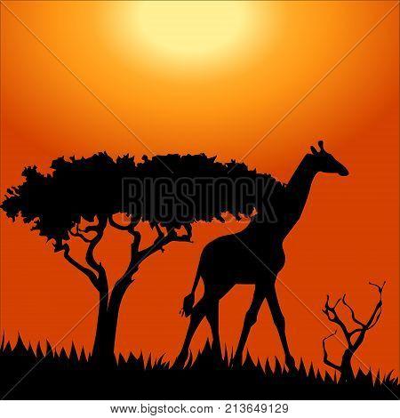 Africa safari - silhouettes of wild animals in twilight