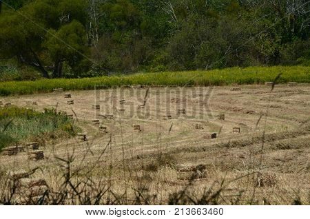 Some square bails of hay in a field