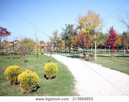 Colorful trees in the park - fall season