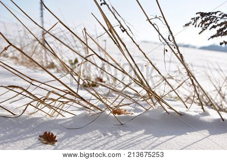 Still Life in the Snow during Winter