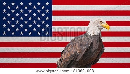 American flag and Bald Eagle. National symbols of USA. Patriotic US banner emblem background. Flag of the United States of America with real detailed fabric texture. American national official flag