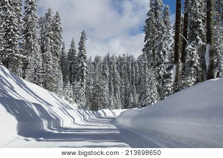 Winter landscape with road in snowy forest