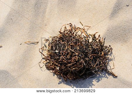 Wrack on a beach on summer at Baltic sea in Poland.