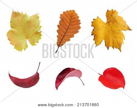 set of multicolored autumn leaves isolated on white background