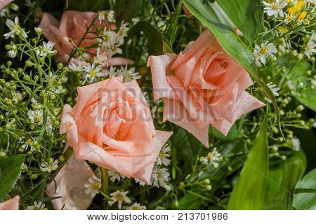 Roses Flowers Decoration At Flower Market