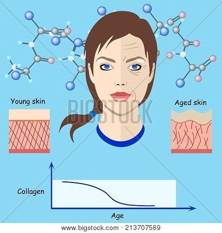 Vector faces and two types of skin - aged and young for medical and cosmetological illustrations isolated, aging process, collagen fibres