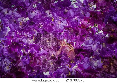Beautiful Decoration Of Flowers At Pakklong Talad Flower Market