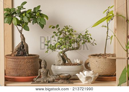 It is image of bonsai corner with decoration