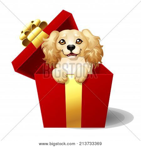 The lovely beige dog of breed Cocker Spaniel looks out of a half-open red gift box. A yellow dog a symbol 2018 new years according to the Chinese calendar. A cartoon vector illustration.